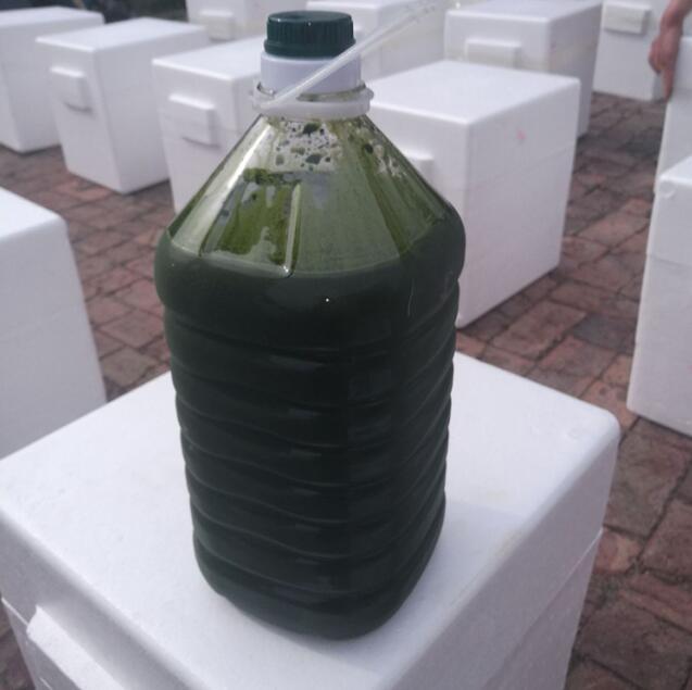 海水小球藻浓缩液(拟微绿球藻浓缩液)
